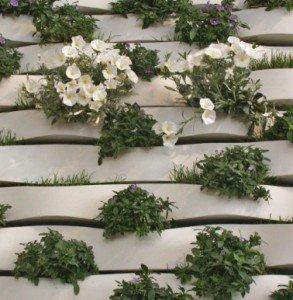 Muro vegetale