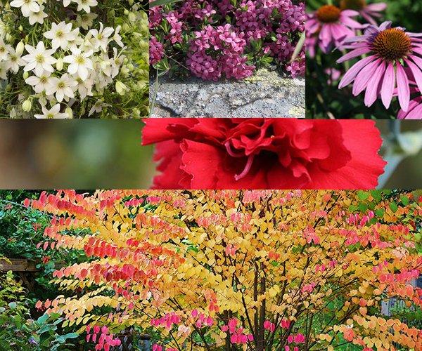Piante per giardino in autunno