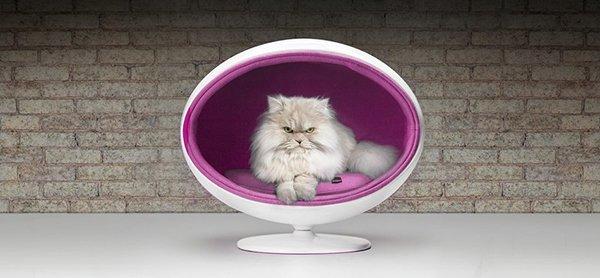 Padpod gatto