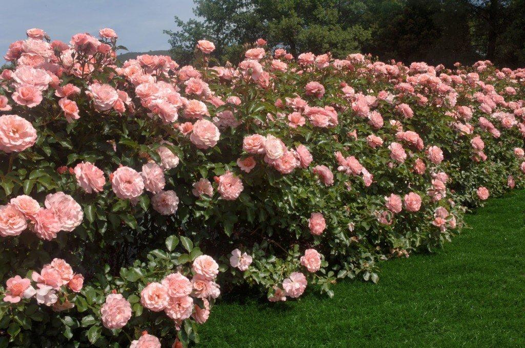 rinfrescare giardino 2
