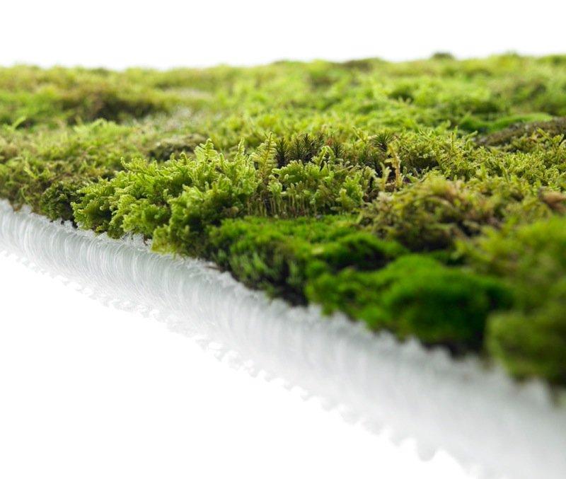 soggiorno ecologico: un tappeto di muschio