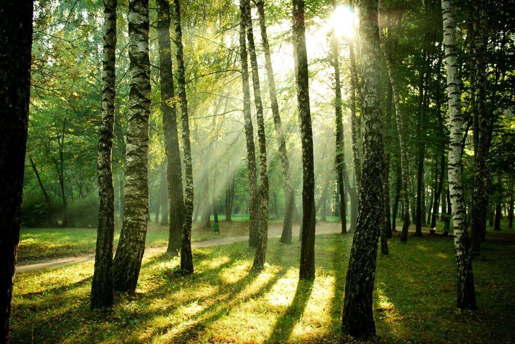 legno sostenibile da foreste