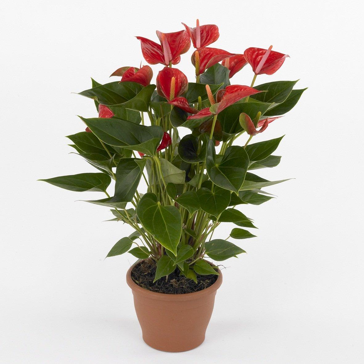 Piante da appartamento per la casa arredare con le piante for Piante appartamento design