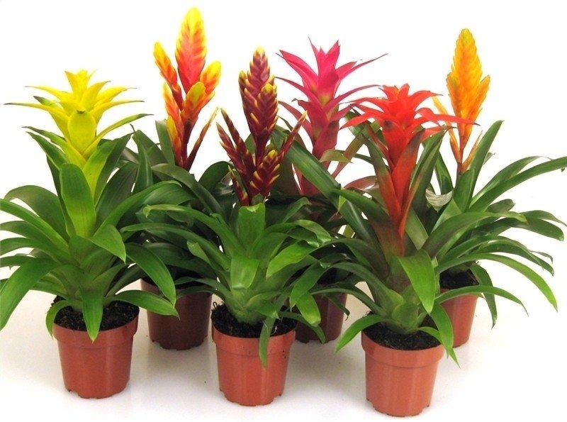 Piante da appartamento per la casa arredare con le piante for Piante e fiori da appartamento