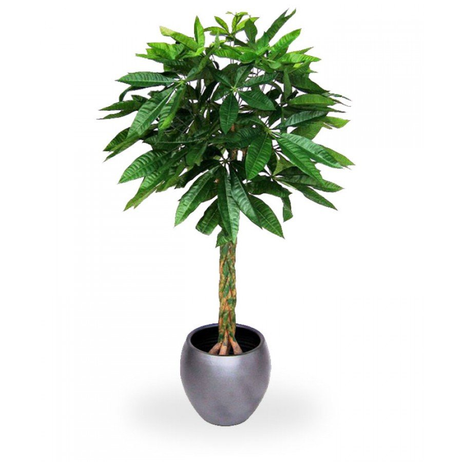 Tronchetto Della Felicità Da Esterno piante da appartamento per la casa: arredare con le piante