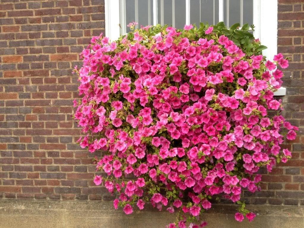fiori da balcone consigli pratici per un balcone fiorito