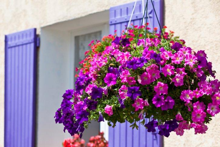Fiori da balcone consigli pratici per un balcone fiorito for Piante in vaso pieno sole