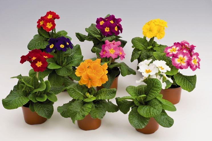 Fiori da balcone consigli pratici per un balcone fiorito for Piante da vaso per esterno