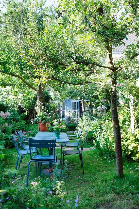 Alberi da giardino consigli e suggerimenti per aiutarvi - Alberi particolari da giardino ...