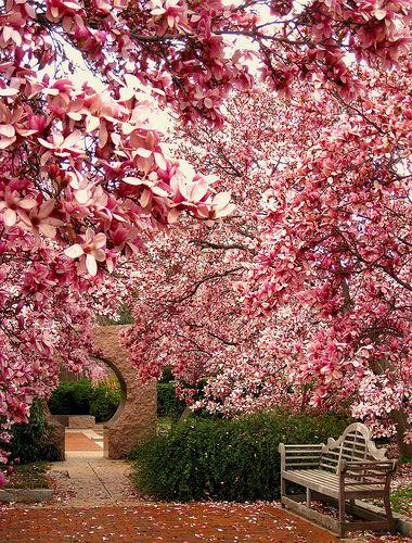 Alberi da giardino Magnolia