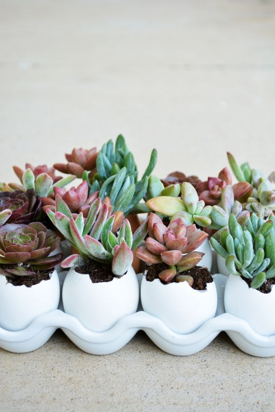 Balcone fiorito piante grasse