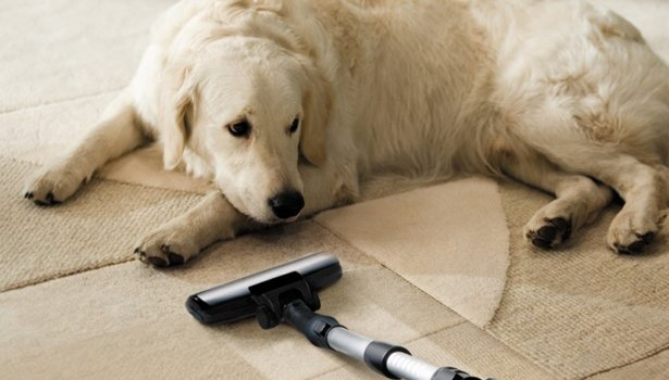 Aspirapolvere per peli di animali modelli consigliati e recensiti designandmore arredare casa - Cane pipi letto ...