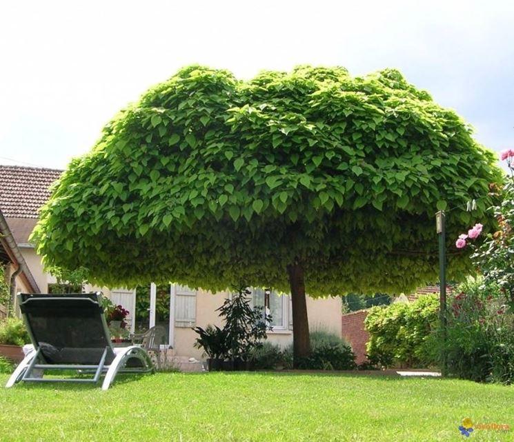 Piante da giardino belle e facili da coltivare i nostri for Piante basso fusto da giardino