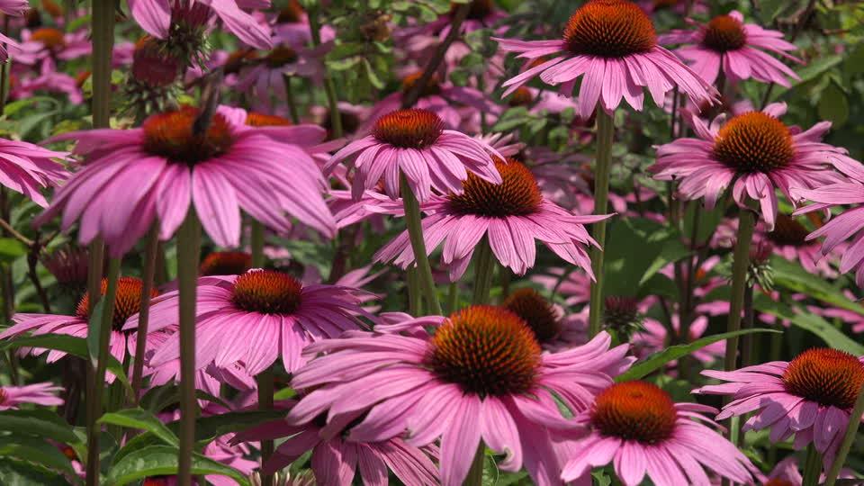 Piante da giardino belle e facili da coltivare i nostri for Piante belle da giardino