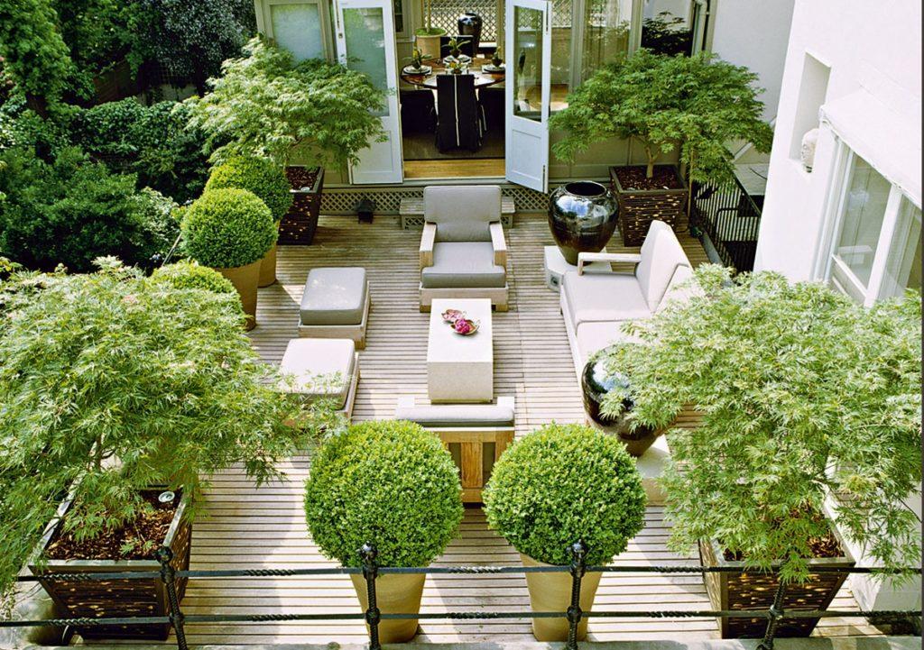 Piante da terrazzo: le specie più facili da gestire, consigli ...