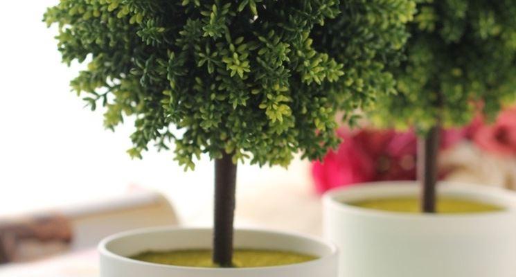 piante ornamentali eccovi alcune piante decorative da