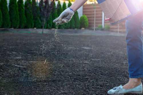 semi per erba