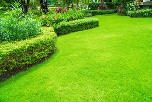 giardino erba