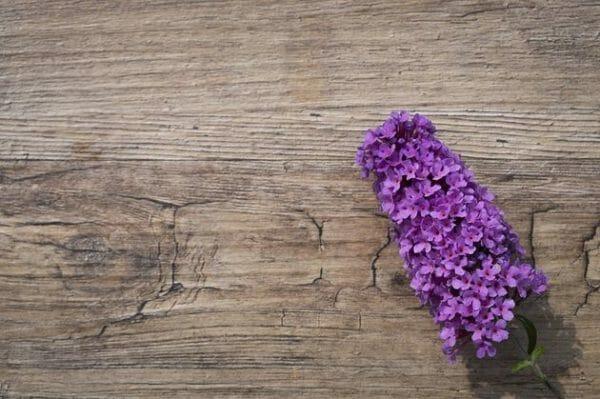 abbinamento color lilla