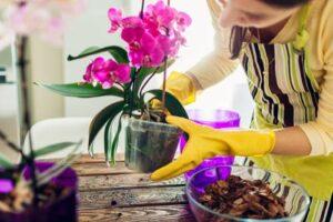 Come fare rifiorire le orchidee