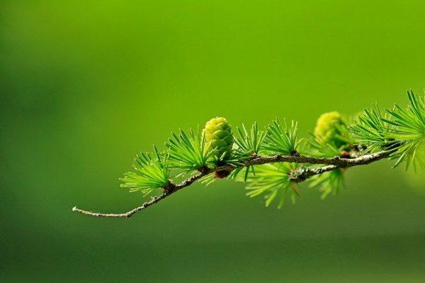 Sfumature di colore verde