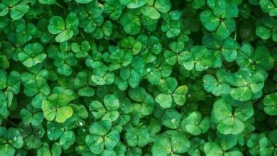 Photo of Verde, dalla natura il colore più fresco per arredare