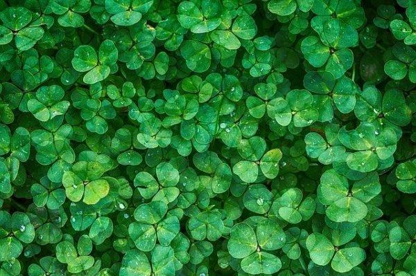 colore verde per arredare