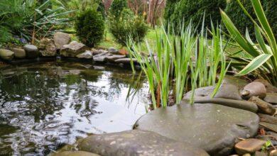 Photo of Come costruire un laghetto da giardino, tutte le fasi e i consigli